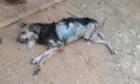 Cão é encontrado morto após ser abandonado por dono que viajou