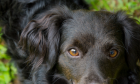 Bolsonaro sanciona lei que proíbe sacrifício de cães e gatos saudáveis
