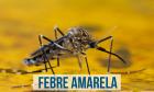 Novo surto de Febre Amarela faz OMS alertar Brasil