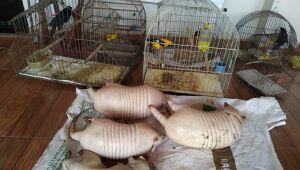 Caçadores são presos com animais abatidos e aves em cativeiro