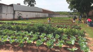 Trabalho de detentos leva alimentação saudável a centenas de pessoas carentes