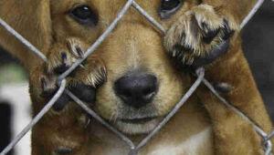 Aprovados combate a maus tratos contra animais e utilidade pública