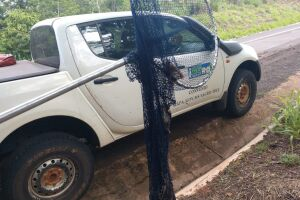 Técnicos da Iagro monitoram focos de raiva em bovinos na região de Cassilândia