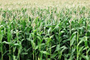 O agro brasileiro alimenta 800 milhões de pessoas, diz estudo da Embrapa