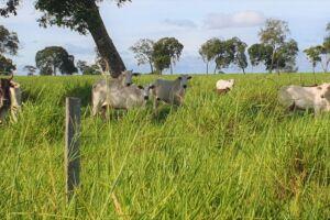 Aberta campanha de vacinação de bovinos e bubalinos em Mato Grosso do Sul, contra a febre aftosa