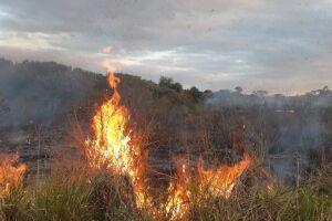 Fogo queima parte de área de preservação ambiental e mobiliza GM e Bombeiros
