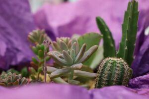 Curso gratuito do Senar/MS ensina como cultivar corretamente cactos, suculentas e rosas do deserto