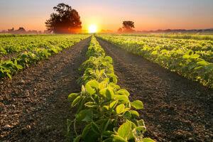 Falta de chuvas atrasa plantio de soja em Mato Grosso do Sul