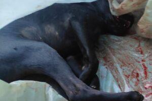 Jovem vai preso em Dourados após morte cruel de cachorro