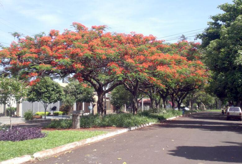 """Com déficit de 22,3 mil árvores, Dourados cria """"Plano Verde"""""""