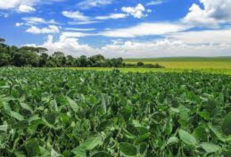 Soja brasileira tem tecnologia para aumento de produção sem pressão por áreas de florestas