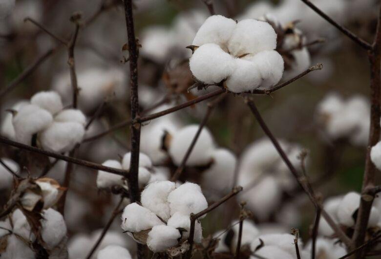 Embrapa anuncia bioinseticida contra pragas na soja, milho e algodão