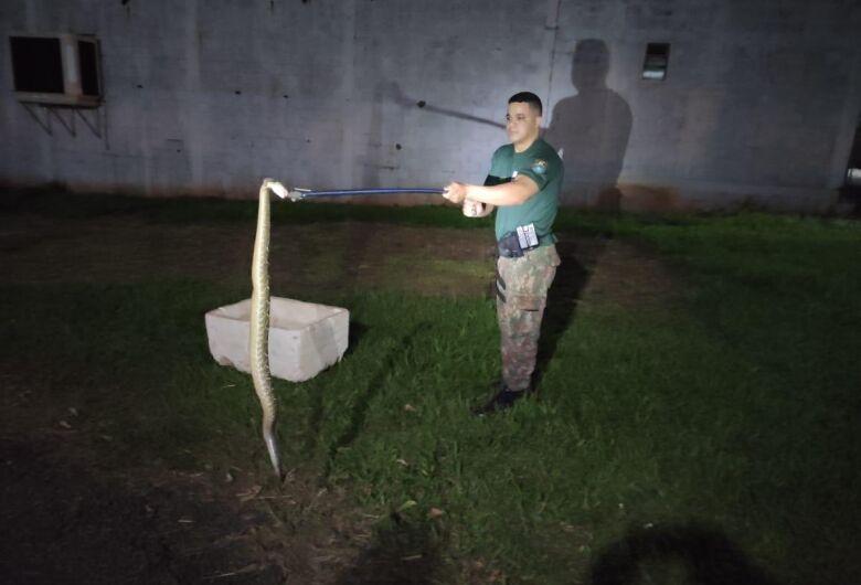 PMA captura cascavel de cerca de 1,5 metro dentro de residência em Mundo Novo