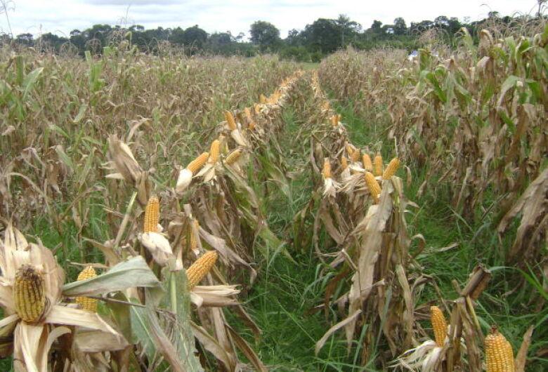 Diversificação de espécies vegetais contribui para melhorar os atributos físicos e químicos do solo