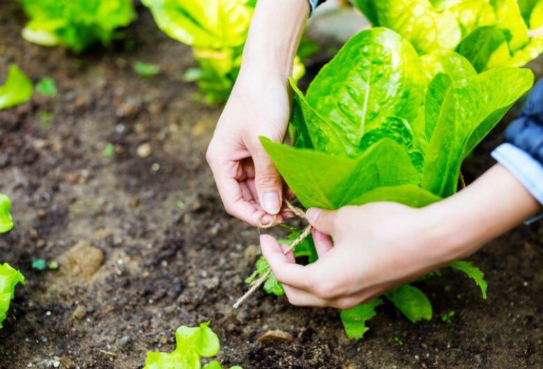 Crédito para custeio rural antecipado pode ajudar produtor na compra de insumos agrícolas