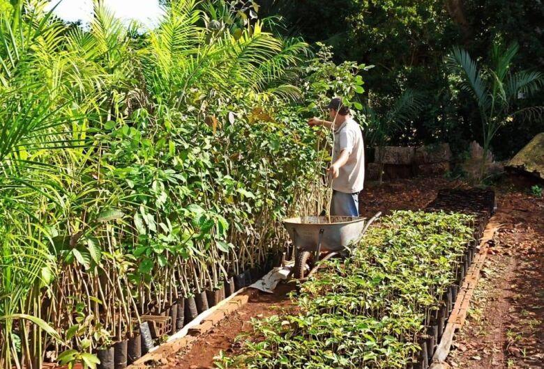 Instituto do Meio Ambiente vai doar 4 mil mudas de árvores