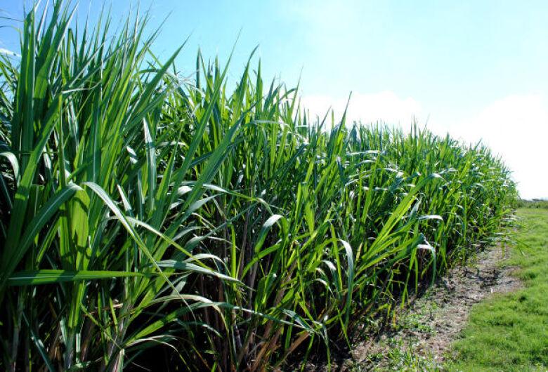 Mudanças e extremos climáticos impactam a produção de cana-de-açúcar