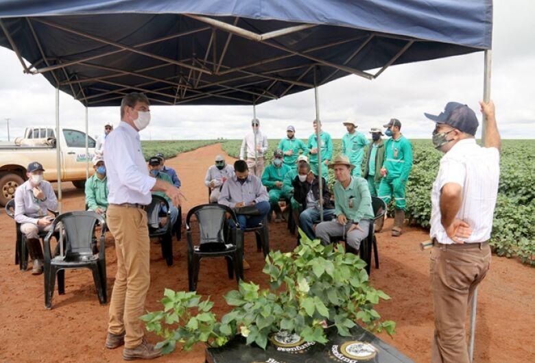 Palestra sobre fisiologia do algodoeiro ajuda produtores a aperfeiçoarem manejos