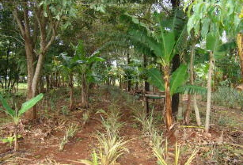 Sistemas agroflorestais biodiversos conservam e melhoram a qualidade do solo