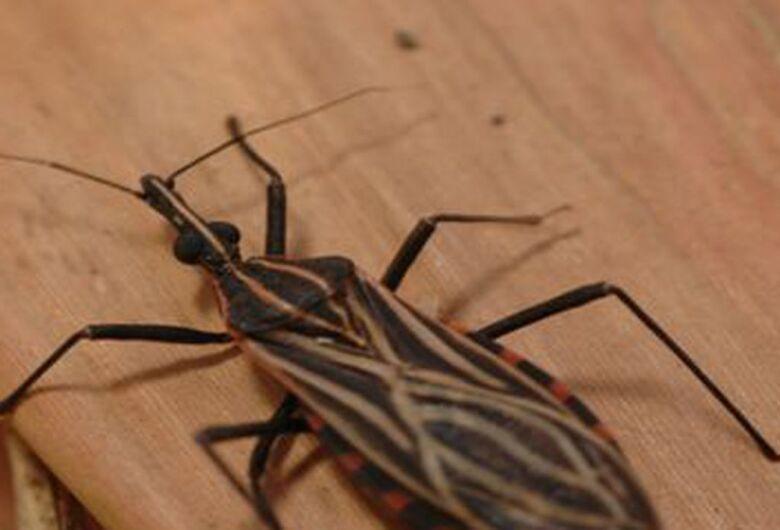 Acordo vai combater transmissão congênita da doença de Chagas