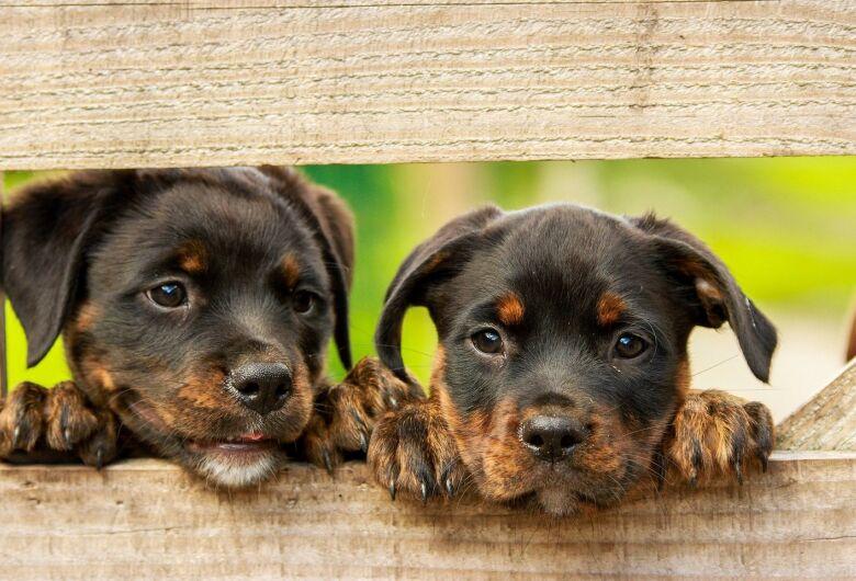 Projeto autoriza que fábricas veterinárias produzam vacina contra a covid-19