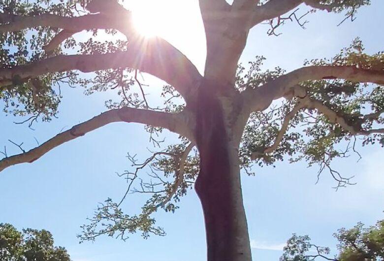 Final de semana de dia das mães será de tempo firme em Mato Grosso do Sul