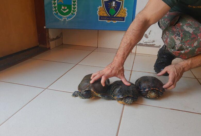 Em operação, PMA apreende animais silvestres em chácara e multa proprietário em R$ 66 mil