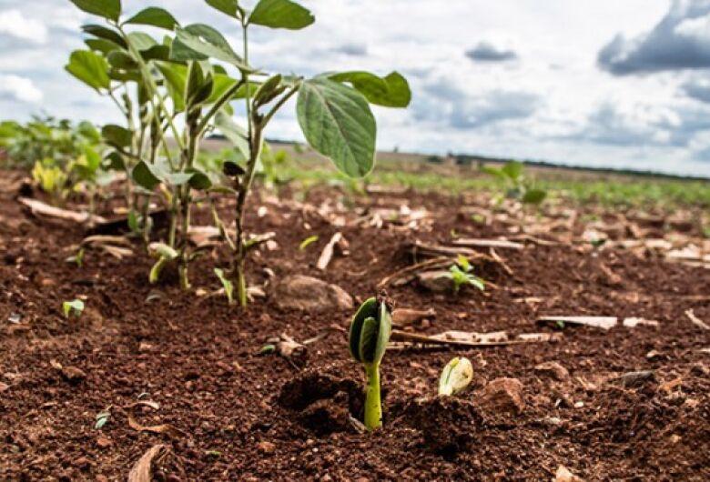 Saiba mais sobre o vazio sanitário da soja e calendário de semeadura em MS