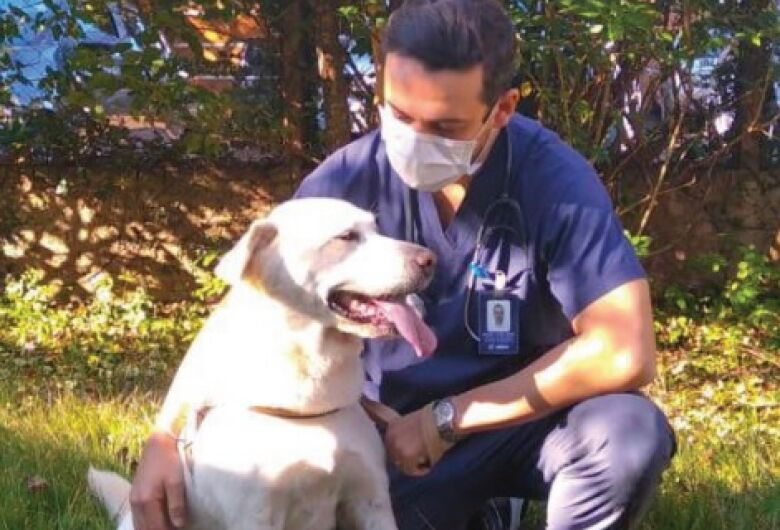 Câncer em cães e gatos é cada vez mais comum, afirma veterinário