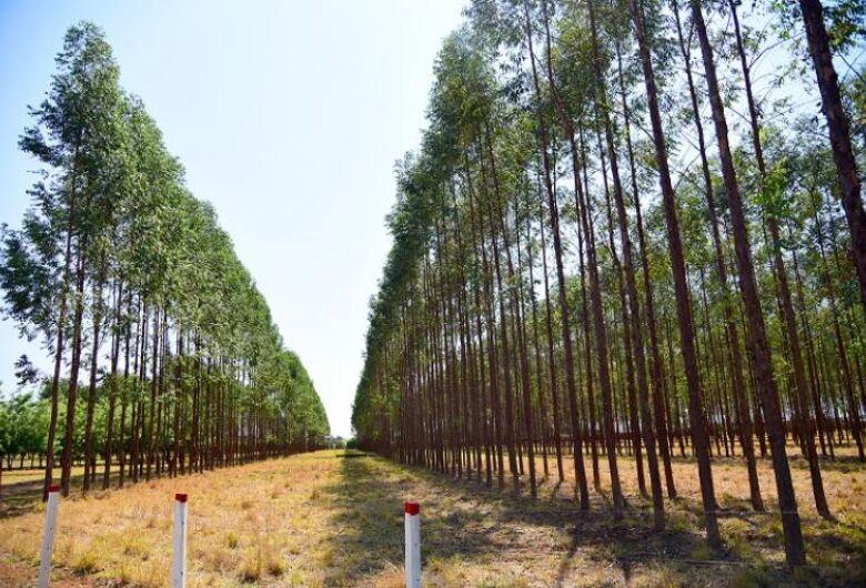 De janeiro a maio, produtos florestais representam 23% das exportações de MS com faturamento de US$ 620 milhões