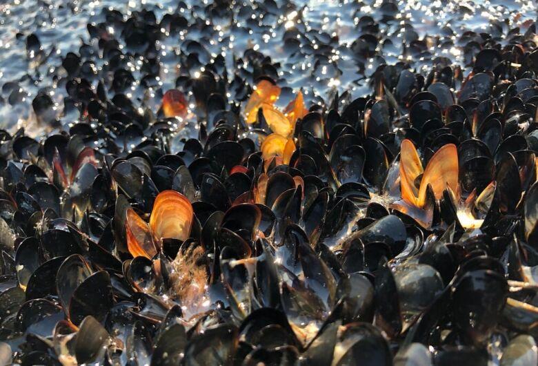 Onda de calor matou mais de 1 bilhão de criaturas marinhas