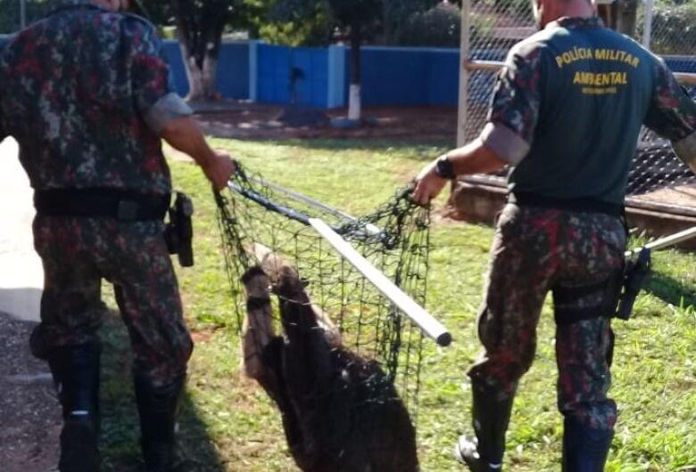 Ambiental captura 1.337 animais silvestres no primeiro semestre