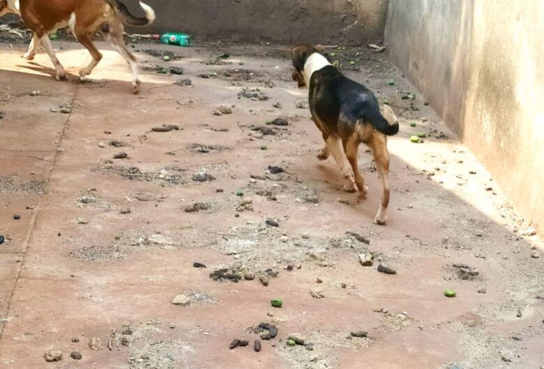 Polícia resgata cinco cachorros em situação de abandono