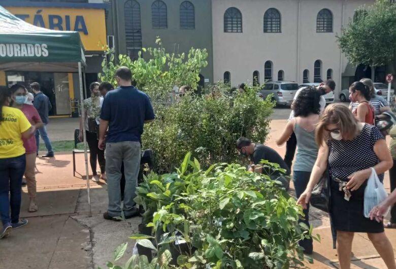Em comemoração ao Dia da Árvore, mudas são distribuídas na Praça Antônio João