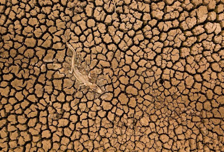 Saiba quem é o brasileiro premiado por foto de jacaré morto na seca