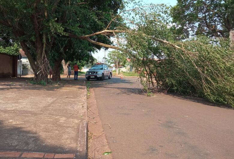 Chuva derruba 15 árvores em Dourados