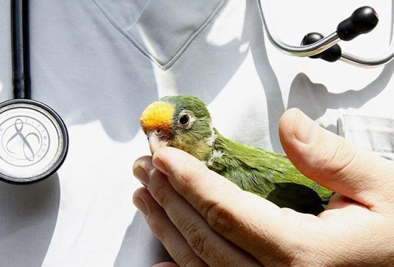 Tempestades aumentam em 40% número de animais silvestres levados para Centro de Reabilitação