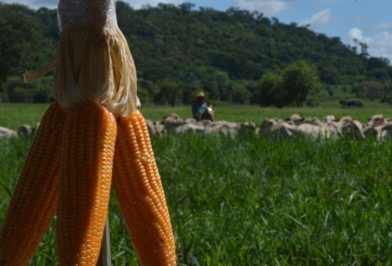 A evolução de Mato Grosso do Sul como uma das principais regiões produtoras do país