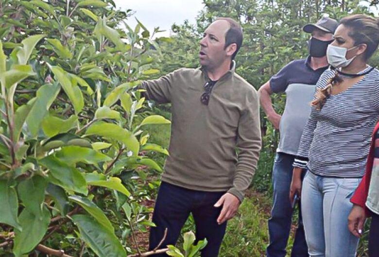 Mais de 650 indígenas sul-mato-grossenses serão contratados para o raleio das maçãs