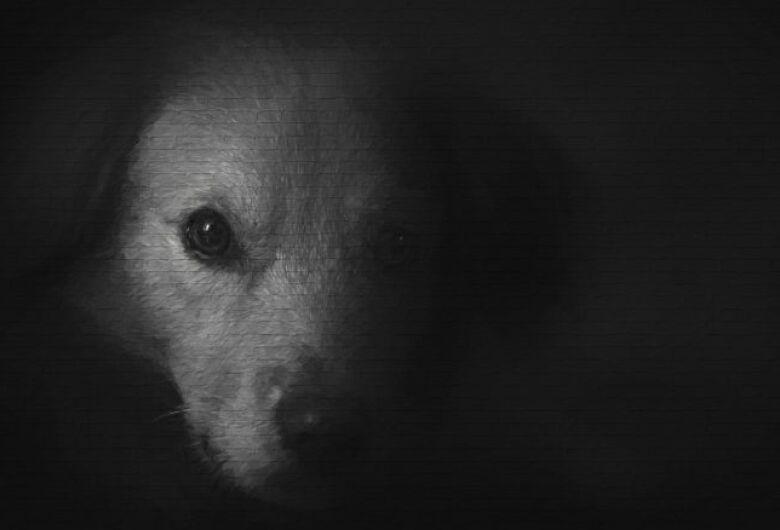 Poder público deve zelar pelo bem-estar dos animais em situação de abandono e maus-tratos