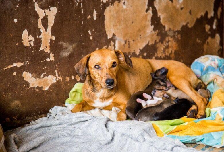 Associação Amigos dos Animais realiza bazar da pechincha