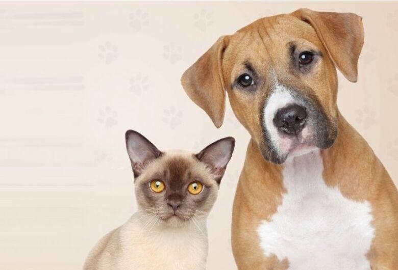 CCZ terá ponto de vacinação cães e  gatos na escola Luís Antônio no sábado