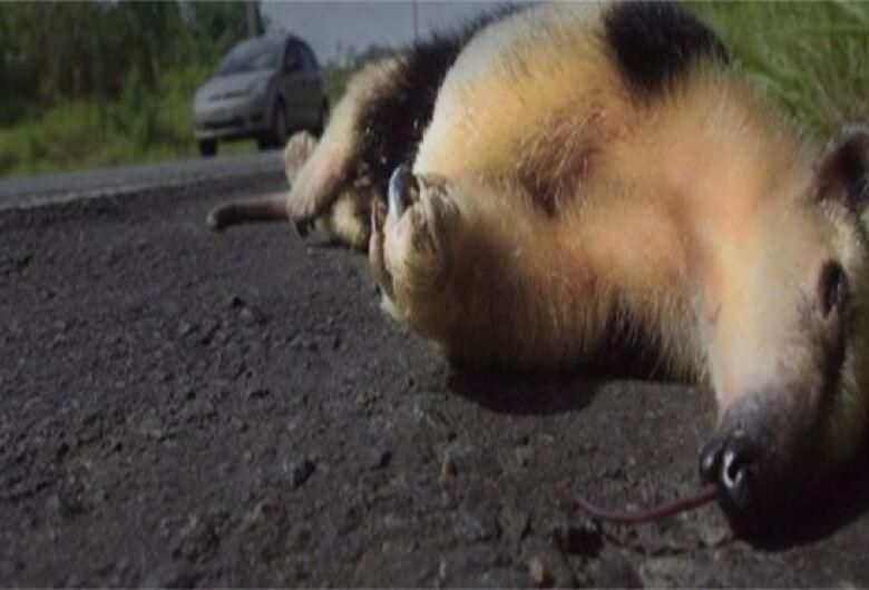 Uems e Agesul promovem monitoramento de animais atropelados em MS