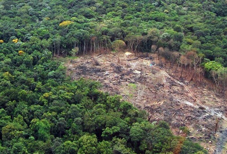FAO alerta para desafio mundial de enfrentar o desmatamento