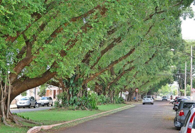 Dia da Árvore: Dourados tem 48 árvores tombadas como patrimônio do município