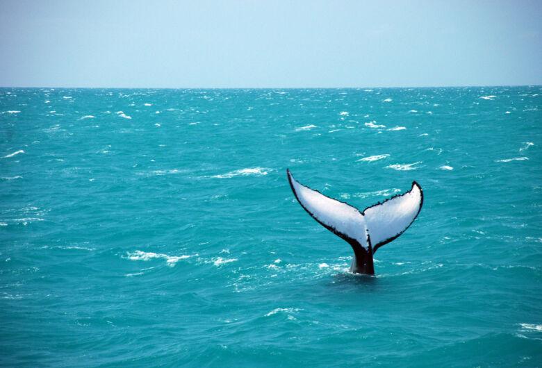 WWF diz que Japão caçou 50 baleias em área protegida da Antártida