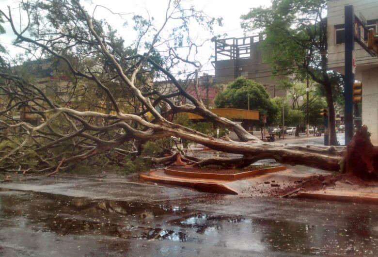 Chuva de 41 minutos tem granizo, vento forte e derruba árvores no centro