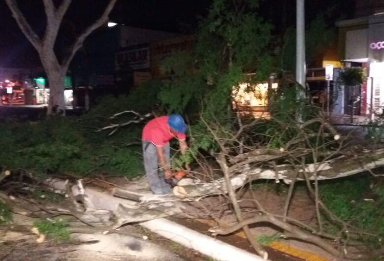 Força-tarefa retira mais de 20 árvores que caíram durante ventania em Dourados