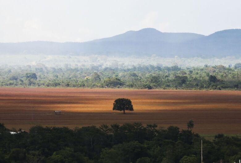 Desmatamento no Brasil cresce 13,72%