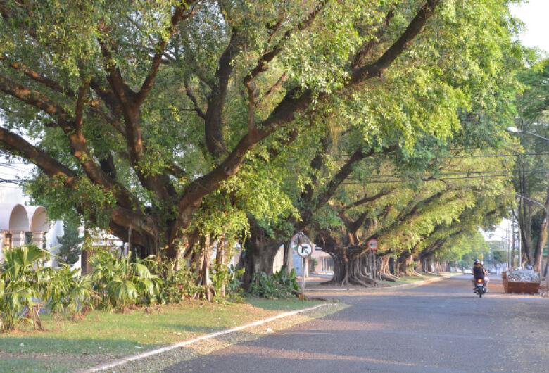 Inédito, Plano Diretor de Arborização de Dourados será concluído em 6 meses